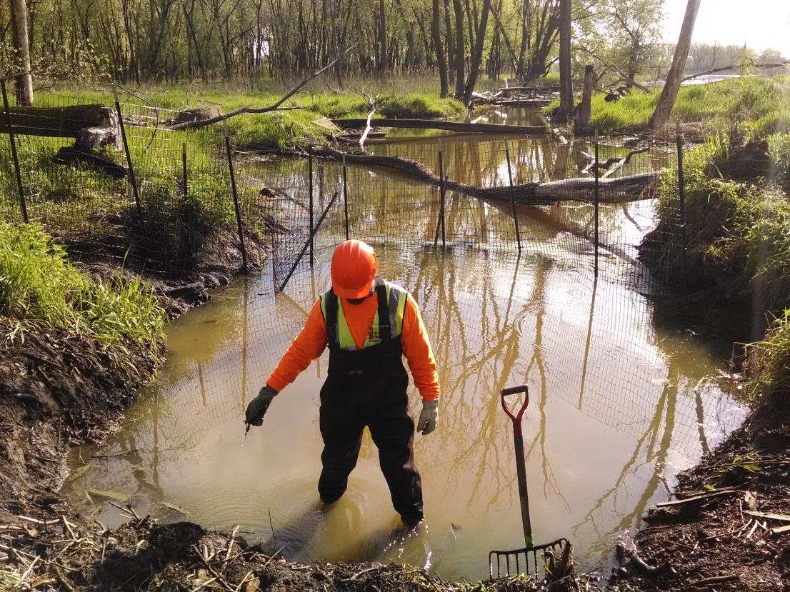 dismantling_beaver_dam_hegewisch_marsh