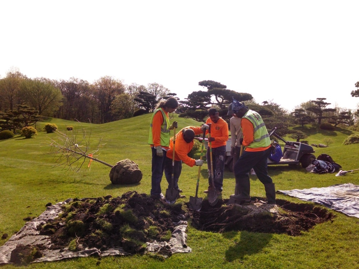 tree_planting_chicago_botanic_garden
