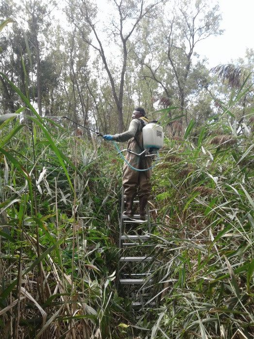 Ecological Restoration Sprayer Ladder