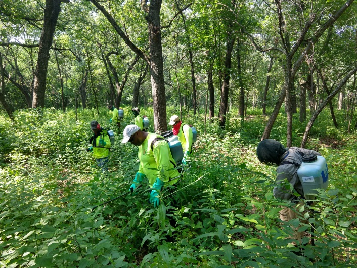 Ecological Restoration Woods Spraying