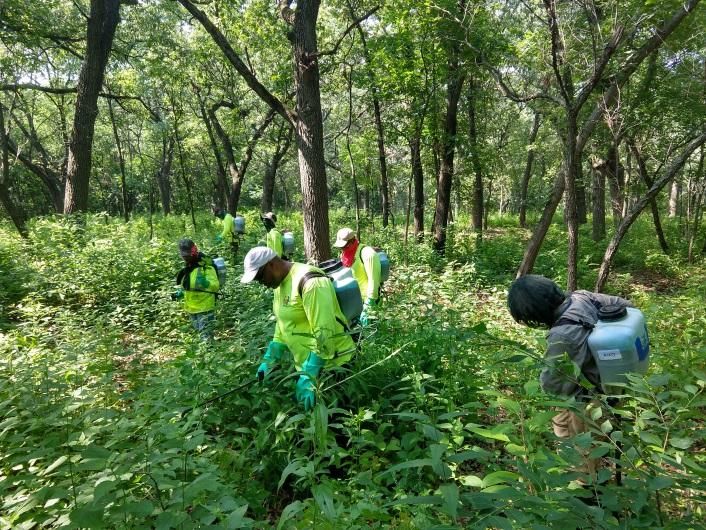 Ecological Restoration Woods Spraying